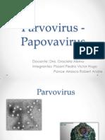 Parvo Virus