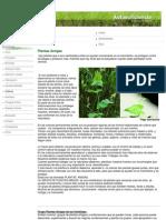 Autosuficiencia - Plantas Amigas