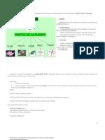 Estructura de Las Plantas