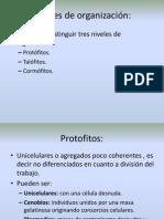 Morfo 2 Niveles de organización