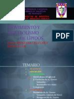 Metabolismo de Lipidos (Diapos)