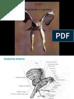 Aves Anatomia 1