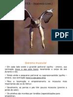 Aves Anatomia 2