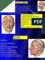 Muschii-Mimicii