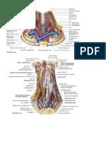 Head and Neck Anatomy