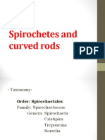 Spirochetes and Curved Rods