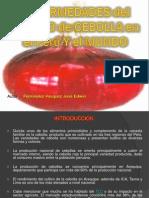 manejoagronomicoyenfermedadesdelacebolla-2010-101016014825-phpapp02