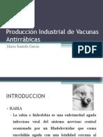 Producción Industrial de Vacunas Antirrábicas