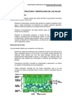 Hojas.pdf