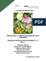 Producción y Comercialización - Chile Habanero