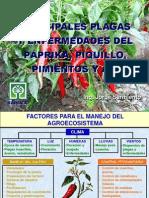 PRINCIPALES PLAGAS Y ENFERMEDADES DEL PÁPRIKA, PIQUILLO, PIMIENTOS Y AJÍ