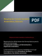 Respiración Celular y Aeróbica Glocosis
