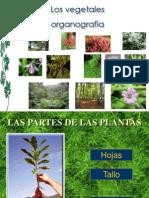 Plantas..ppt222