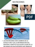 MUTACIONES Principales Conceptos Giovanni 3
