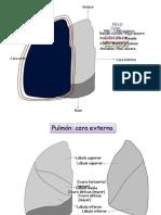 Pulmones Final