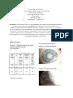 Informe d Microscopia Optica
