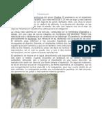 Paramecium Tarea #1 Paramecium