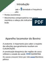 Semiologia Locom Boi