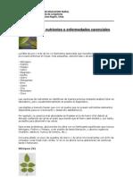 Carencias de Nutrientes o Enfermedades Carenciales 3ro Lal