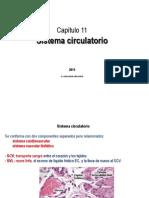 11 Sistema Circulatorio-1