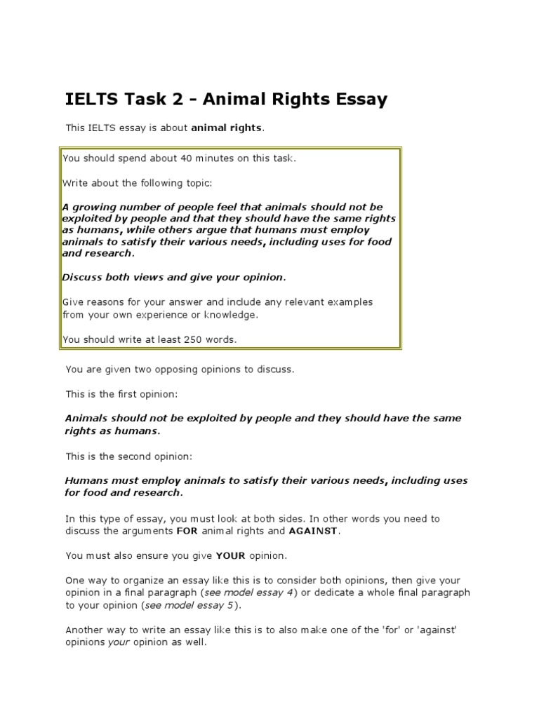 Example Essay Papers  Healthy Food Essay also Sample Essay Paper Animal Rightsesay  Animal Rights  Essays Compare And Contrast High School And College Essay