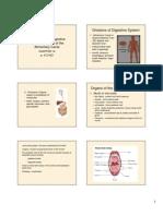 Anatomy Digestive System