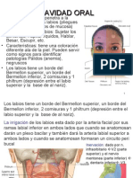 4ta Clase Cabeza Fosa Oral + Degraba - Dr. Herrera