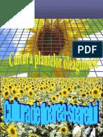 Cultura Plantelor Oleaginoase Floareasoarelui