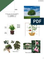 Guia de Las Plantas