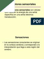 Los Sentidos 2013