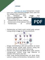 Proses Pembentukan Sel Darah