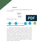 Síntesis de las biomoleculas