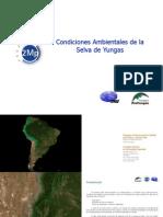 318 Condiciones Ambientales de La Selva de Yungas