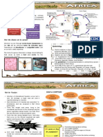 African Trypanosomiasis12
