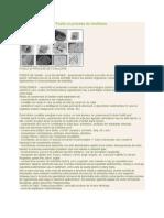Paleontologie Curs 1 Fosile Si Procese de Fosilizare