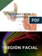 Regiones facial y parotídea
