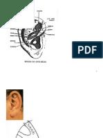 Referencias en Auriculoterapia