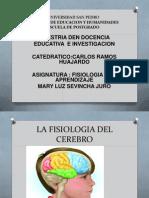 La Fisiologia Del Cerebro