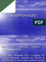 Micropropagacao Final