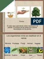 Clasificación de las plantas 080513