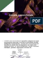 Celulele mezenchimale.ppt2