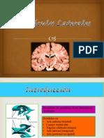 Neuroanatomia Expo