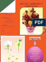 Frutos Botanica