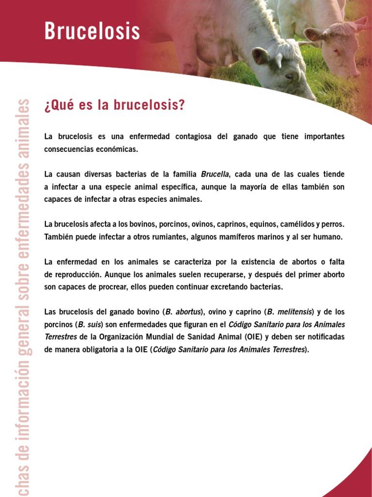 Brucela Enviar A Diego Infeccion Salud Publica