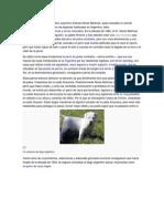 Historia Unica Dogo Argentino