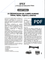 Modulo II Anatomia PDF Procesado