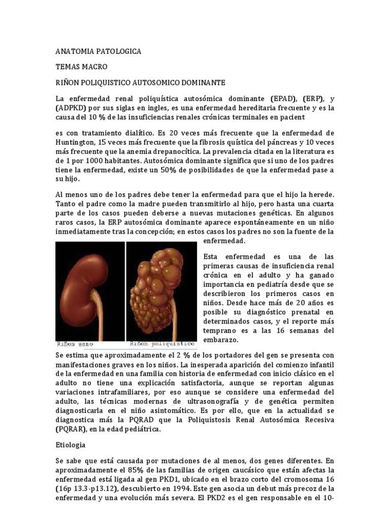 Asombroso Empleos Anatomía Aaa Colección de Imágenes - Anatomía de ...