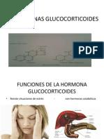 HORMONAS GLUCOCORTICOIDES.pptx