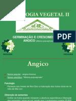 Fisiologia Vegetal II Angico