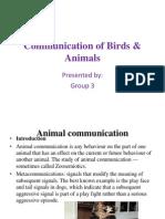 Presentation on animal communication